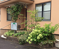 玄関の階段横には花壇があり、季節の花が患者様を出迎えます。